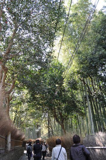 嵐山2012年4月14