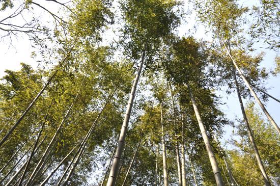嵐山2012年4月15