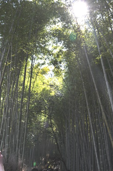 嵐山2012年4月16