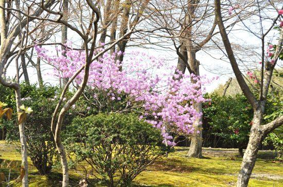 嵐山2012年4月18