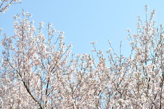 嵐山2012年4月19