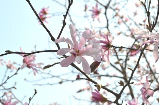 嵐山2012年4月20