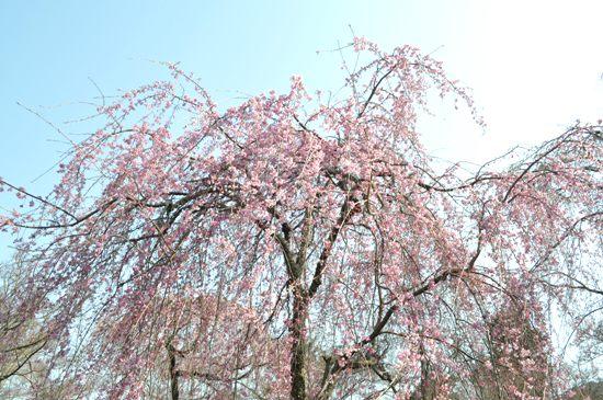 嵐山2012年4月23