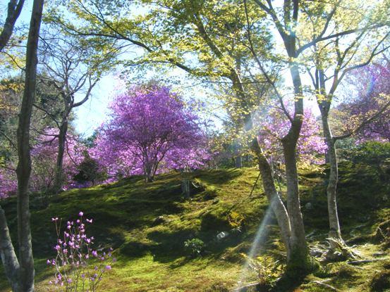 嵐山2010年4月5