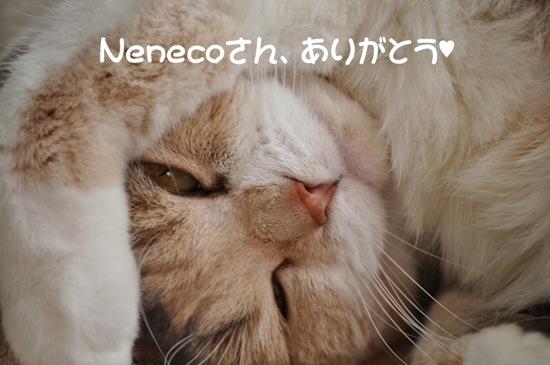Nenecoさん、ありがとう♥