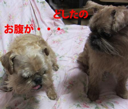004-1-1_convert_20110627012812.jpg