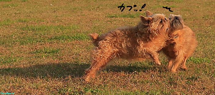 011-yu-3.jpg