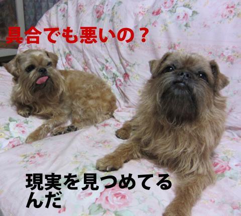 016-1_convert_20110703200822.jpg
