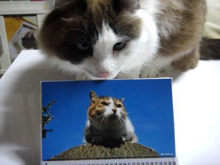 ののちゃんカレンダー