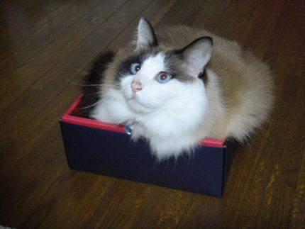 箱入りレオン