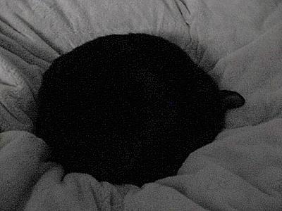 おやすみなさい。Zzzzz