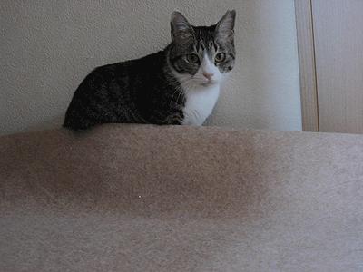 廊下のマットに潜ろうとしているビビ