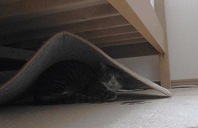 隠れ場所バレたら意味ないんです