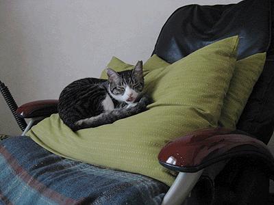 これから、ここで寝るです