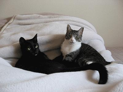 ネコ用ベッドにしましょう
