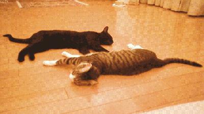 床暖房でまったり