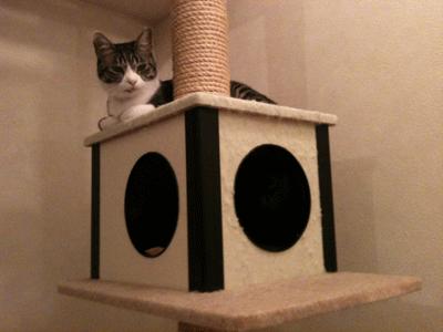 ネコタワーでくつろぐビビ