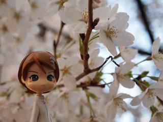 桜といえば…