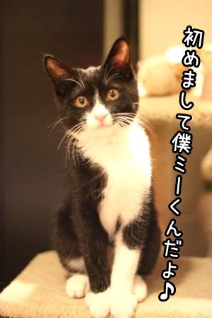 ミーくん20131231-01