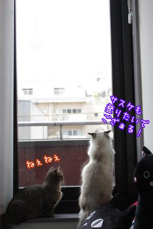 すかいつりー4