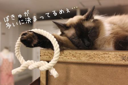 20121016-あぽろ