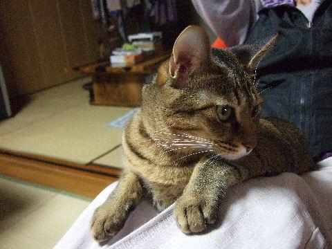 2011_1103金剛組☆0103