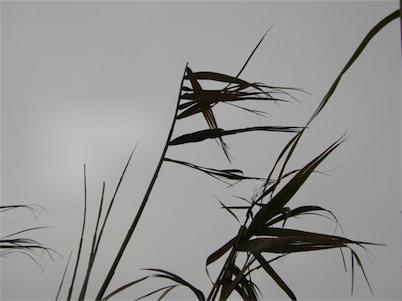片葉の葦02