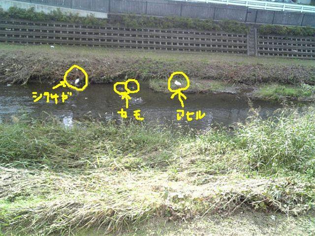 シラサギ+カモ×2+アヒル NEW_