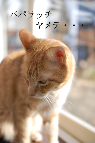 20120213_8.jpg