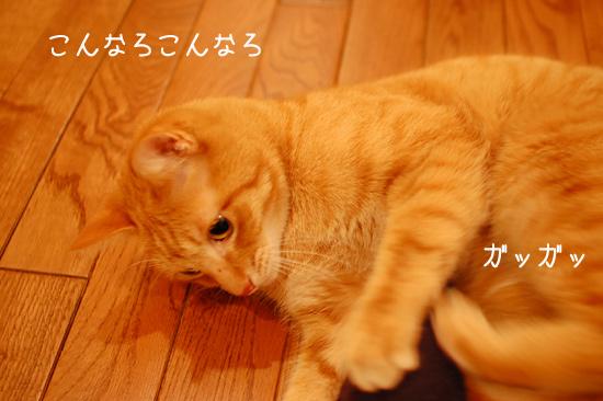 20121128_18.jpg