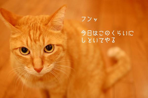 20121128_8.jpg
