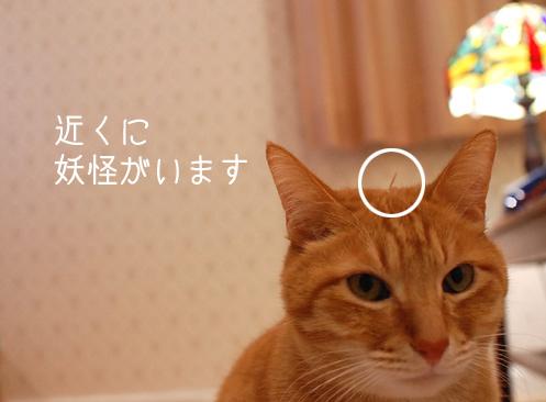 20121229_21.jpg