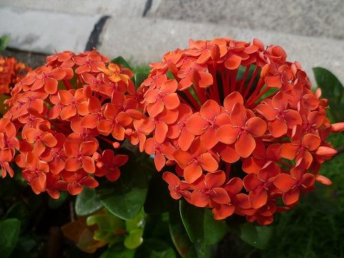 29yhi-P1040890.jpg