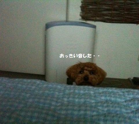nene946.jpg