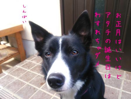DSC_0331aquow45.jpg