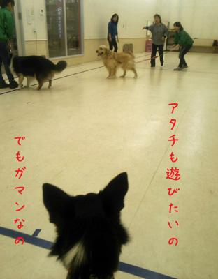 DSC_0821aquow45.jpg