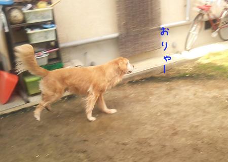 DSC_6508aquow45.jpg