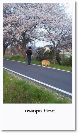 0410sakura.jpg
