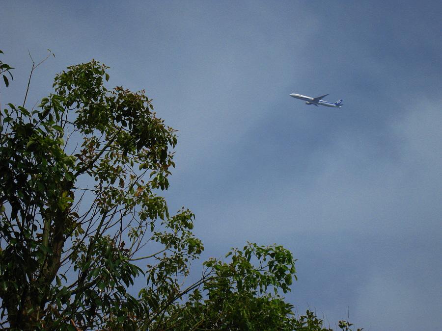 空を見上げたら・・・ANA B777-381ER ANA2176@市立伊丹病院前(by IXY DIGITAL 910IS)