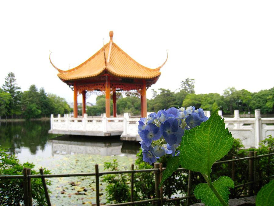 ちょこっと紫陽花と亭(ちん)@緑ヶ丘公園(by IXY DIGITAL 910IS)
