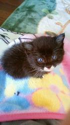 子猫のキティー