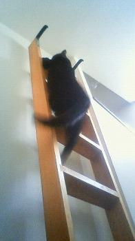s-木登りキティ