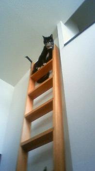 s-降りれないキティ