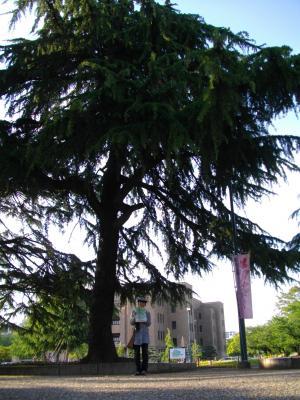 300pxからしと木