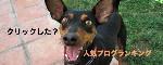 IMG_8123_2_2.jpg