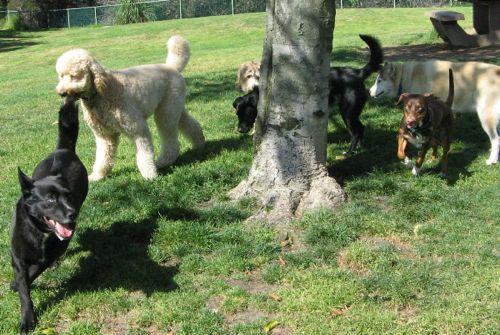 dogpark1_20120722133057.jpg