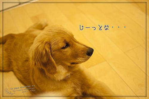 DSC_0069 のコピー