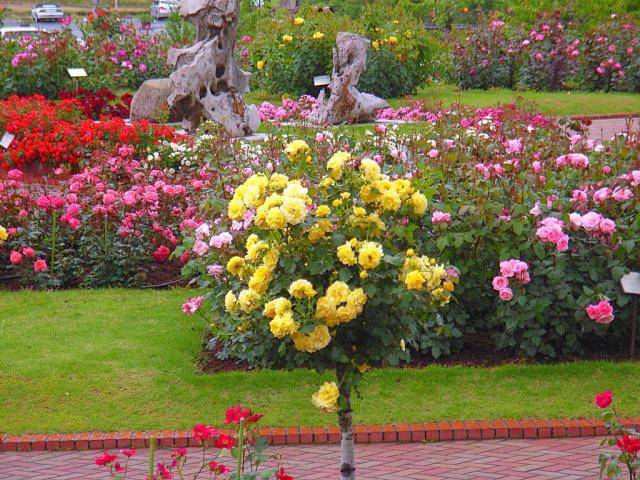 06-Rose14.jpg