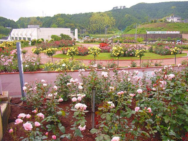 06-Rose15.jpg