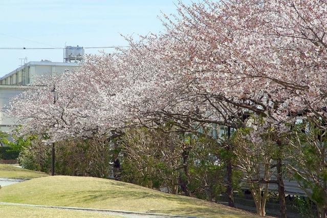 11-Spring01.jpg